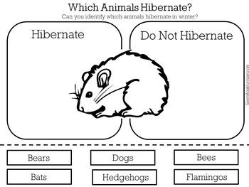 hibernation activity hibernation kindergarten hibernation worksheet