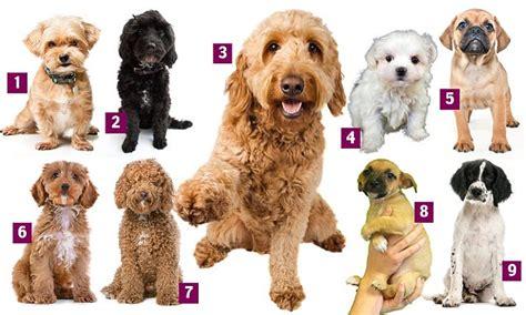 designer dogs rise eightfold   decade