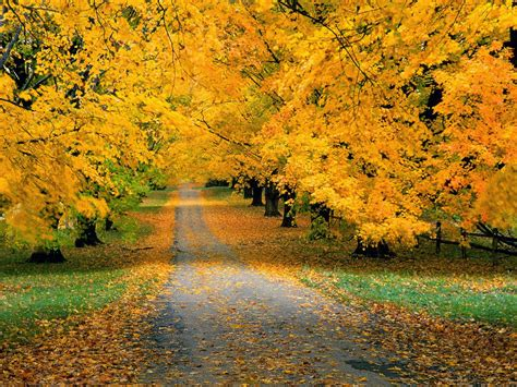 Beautiful Nature Fall Desktop Backgrounds by All New Wallpaper The Beautiful Autumn Wallpaper For