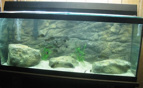 attractive aquarium background technosamrat