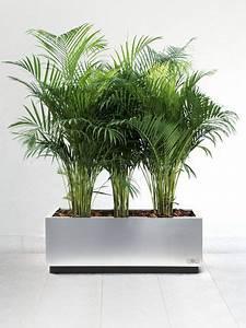 Plante D Extérieur En Pot : plante exterieur en pot l 39 atelier des fleurs ~ Teatrodelosmanantiales.com Idées de Décoration