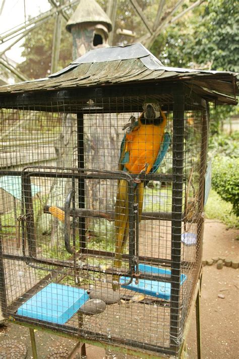 trained parrot blog travelling  south east asia