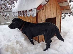 Top 10 best dog house for winter choices in 2017 for Insulated dog houses for winter