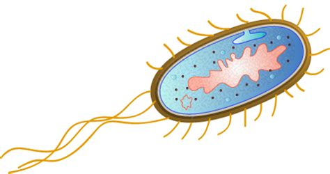 File:Escherichia coli by togopic.png - Wikimedia Commons