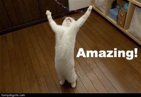 Amazing Meme Amazing Cat Memes Image Memes At Relatably