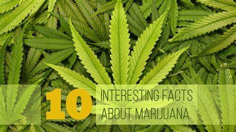 10 Interesting Facts about Marijuana - YouTube