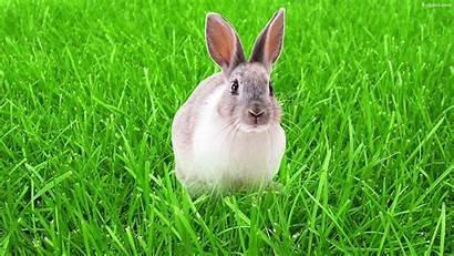 Rabbit Wallpapers Backgrounds Rabbits Desktop Baltana Wallpaperaccess