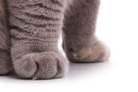 treat  cat   swollen paw cuteness