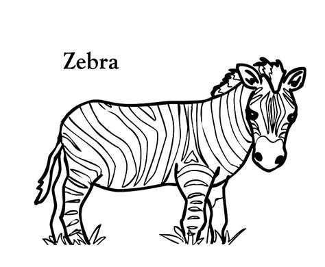 printable zebra coloring pages  kids  adults