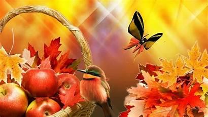 Harvest Apple Wallpapers Fall Desktop November Wallpapersafari