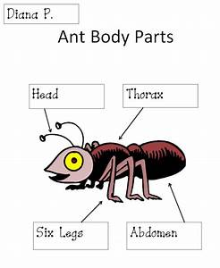 Ant Body Parts Diagram Activity