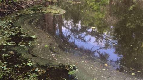 experts warn year perfect storm toxic algae