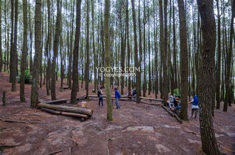hutan pinus imogiri bantul   attractions  jogja