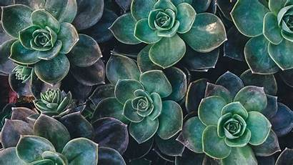 Plant Wallpapers