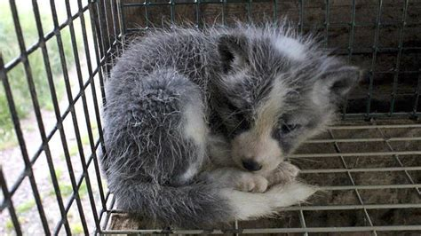 petition stop    real fur   fashion