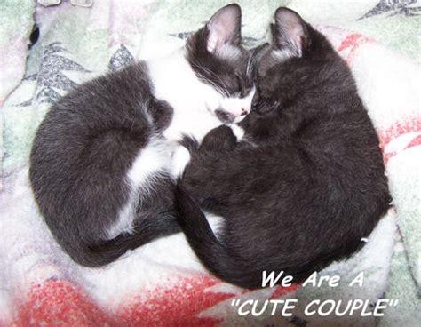 anniversary cats  happy anniversary ecards greeting