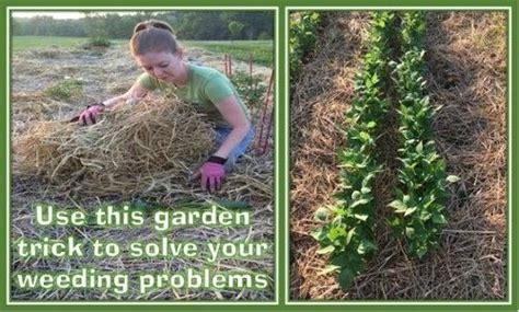 Keep Weeds Out Of Garden by How To Keep Weeds Out Of Your Garden A Grow It Eat It