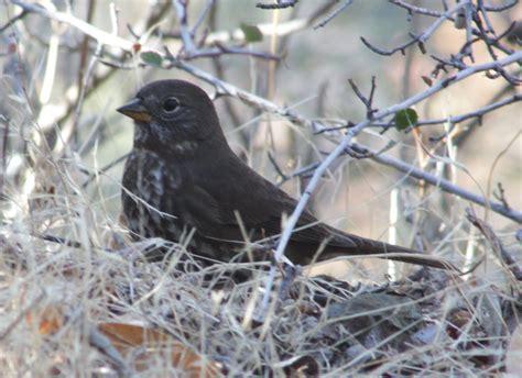 Sfbaywildlifeinfo Blog Wildlife Watching Escapades And
