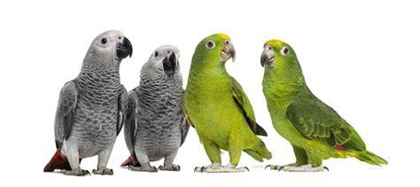 Amazon Types Of Parrots