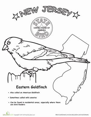 new jersey state bird worksheet education 382 | jersey state bird life science