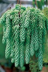 Plante Grasse Artificielle : pinterest le catalogue d 39 id es ~ Teatrodelosmanantiales.com Idées de Décoration