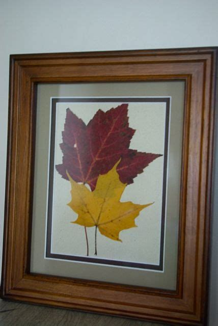 canoe corner framing pressed leaves gift ideas leaf