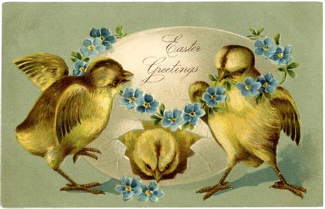 vintage easter chicks image adorable  graphics fairy