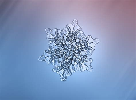 majestic close  pictures  snowflakes