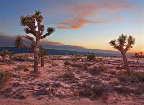 File:Mojave Desert at Dusk (8752735982).jpg - Wikimedia ...