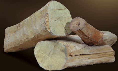 tanaman cendana sandalwood bibitbunga com