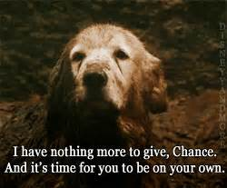 "Disney - Homeward Bound Appreciation Thread 2: ""It's ..."