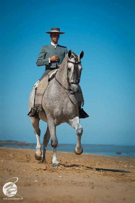 andalusian horse horses arenas yeguada