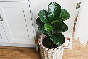 Indoor, Plants, That, Improve, Overall, Health, And, Wellness