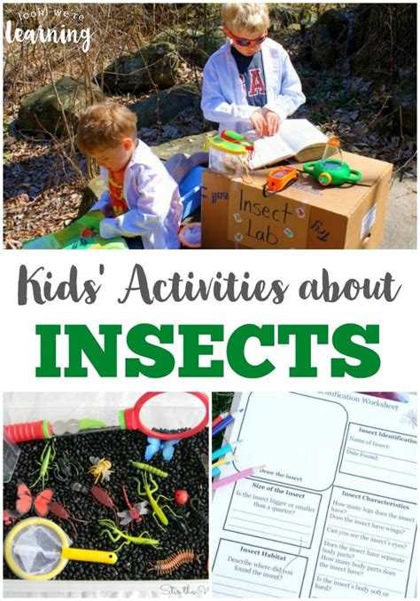 25 best ideas about insect activities on bug 423 | b21ea94ccb2996aef95c553767194fcd