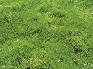Tondre La Pelouse Sans Ramasser : le gazon des mascareignes mon jardin ma maison ~ Melissatoandfro.com Idées de Décoration