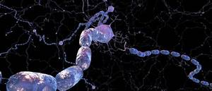 Demyelination and Remyelination: From Mechanism to Therapy ...