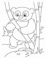 Panda Bamboo Coloring Pages Printable Drawing Pandas Anime Baby Bear Lover Tree Giant Getdrawings Library There Getcolorings Comments sketch template