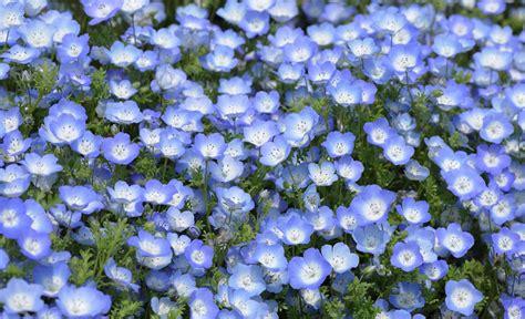 Schattenpflanzen Für Balkon by Schattengew 228 Chse Garten Schattenpflanzen