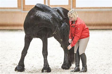 wassertraining  gewoehnen sie ihr pferd ans wasser