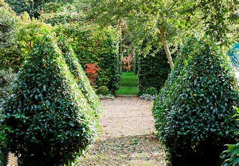 fast growing edible hedge plants australian house