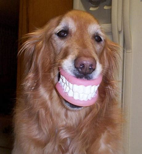 Really Funny Pictures Funny Dogs