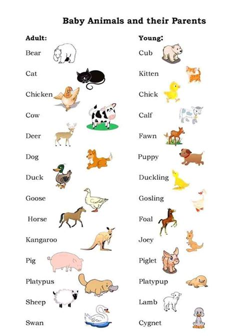 male female young animals  english  images