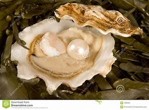 Quotes Of Oysters And Pearls. QuotesGram