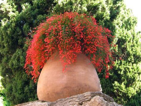 l hivernage des plantes en pot