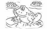 Tadpole Coloring Frog Cycle Drawing Printable Getdrawings Getcolorings sketch template