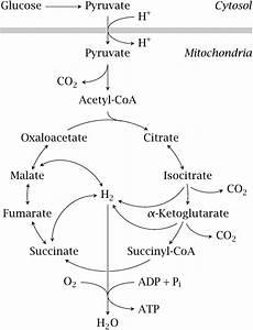 Pin On Biochemistry