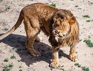 Wild Animal Sanctuary Colorado