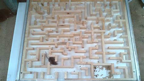 bigger tighter mouse maze experiments
