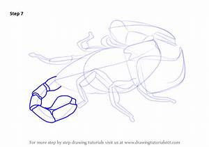 Learn How To Draw A Scorpion  Arachnids  Step By Step