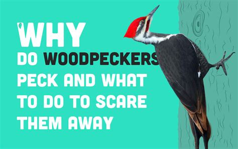 why do woodpeckers peck how to scare them away casa